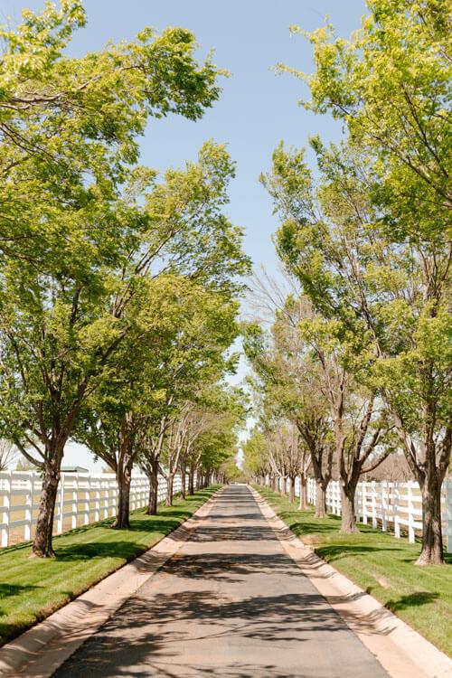 Aspen Ranch Tree Lined Driveway